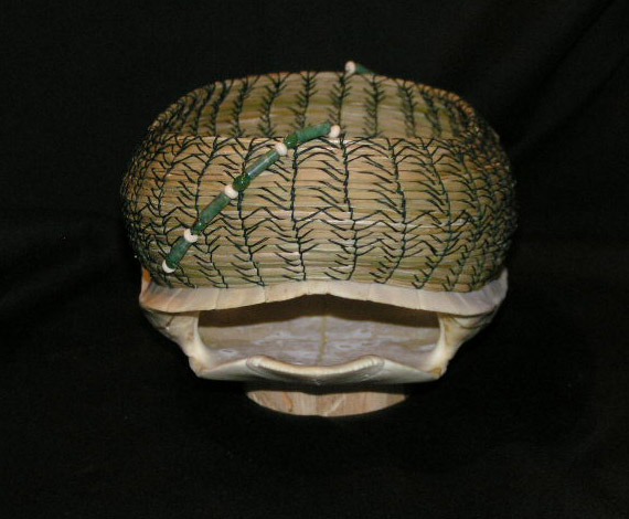 "White Turtle Shell ""Organic Geometry"" back view"
